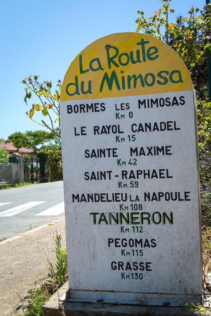 Borne Mimosa