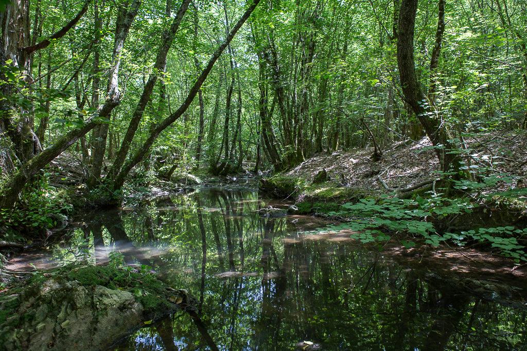 Forêt Royale de Saint-Paul-en-Forêt