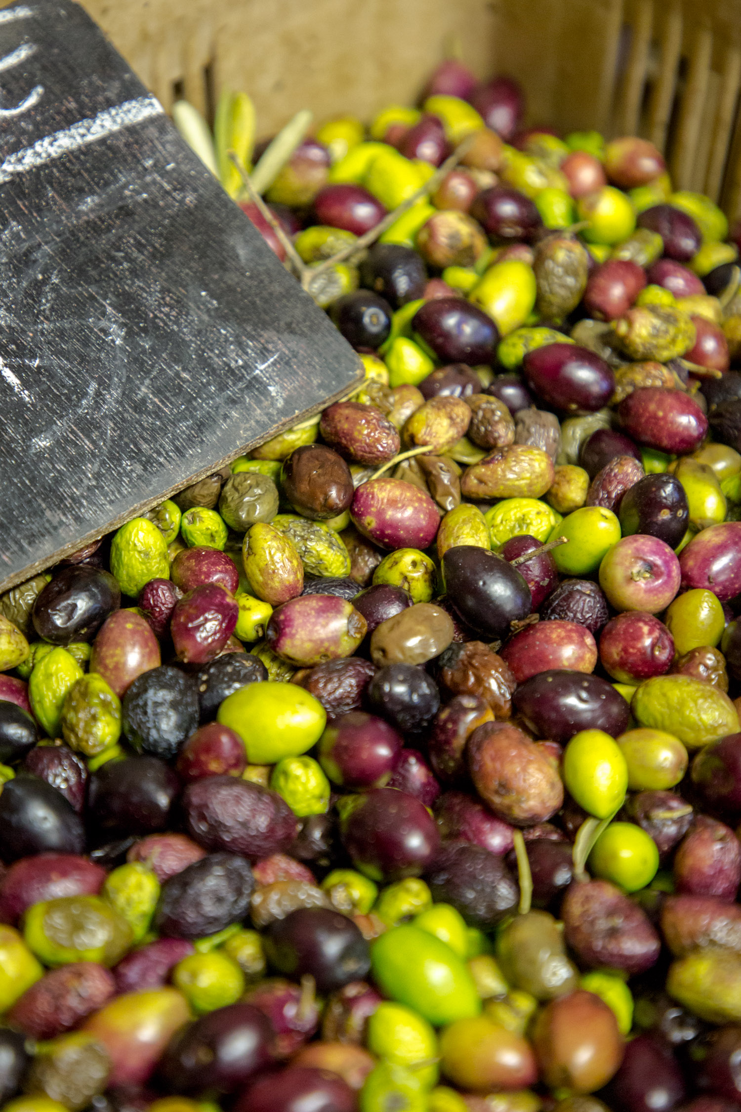 Olives du Pays de Fayence