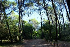 Bois du Defens à Montauroux