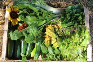 Légumes La Ferme des Cairns